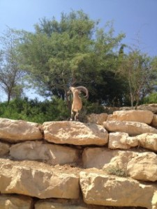 Kibbutz Sde Boker Nature Reserve